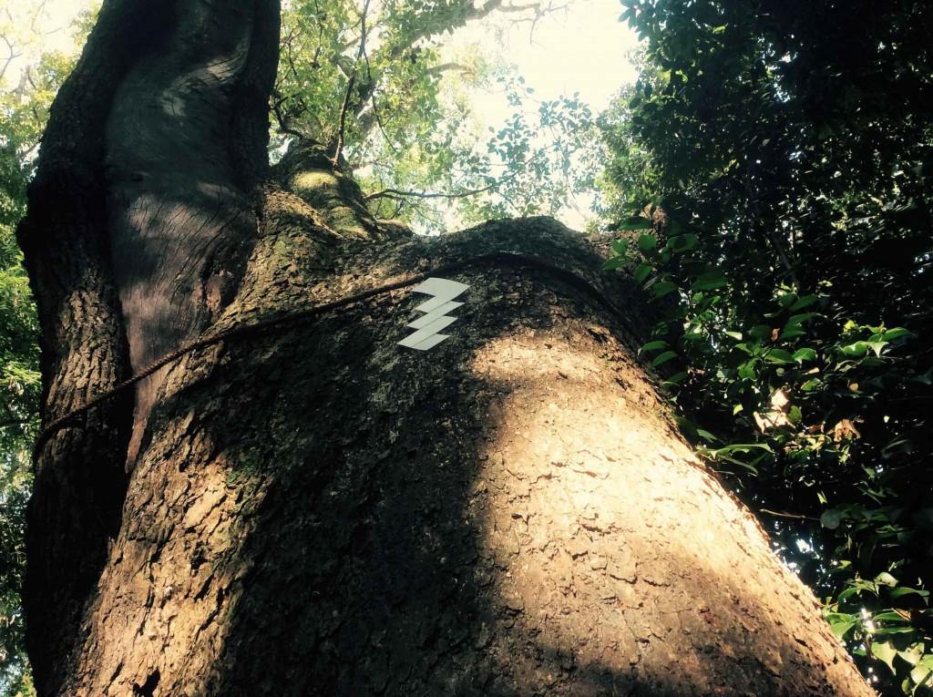 神戸・三宮 生田の森の神木