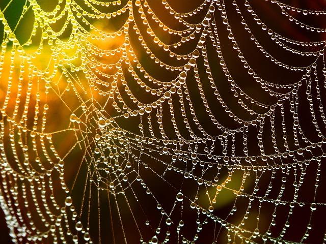 コンプレックス:クモの巣の写真